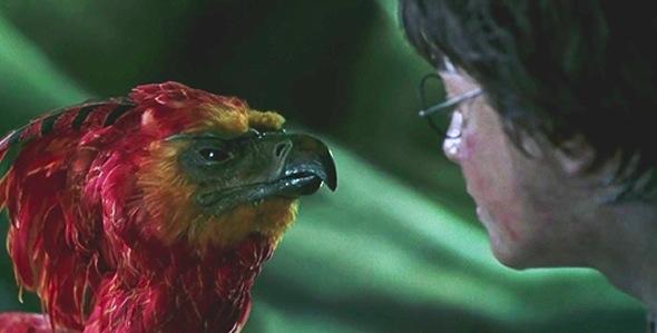 J.K. Rowling será roteirista em série de filmes baseados em Animais Fantásticos & Onde Habitam